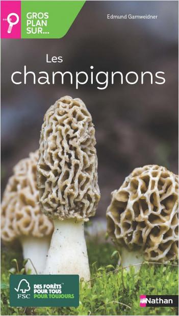 Gros plan sur les champignons - Guide Nature