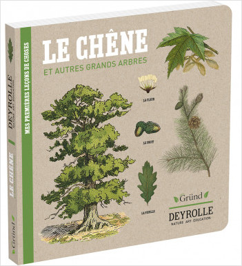 Deyrolle : Le Chêne et autres grands arbres – Album documentaire Jeunesse – À partir de 3 ans