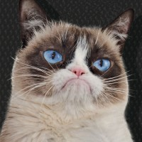 GRUMPY CAT LTD.